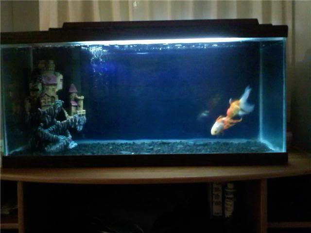 17 best images about ideas for future aquarium on for Aquarium ideas decoration