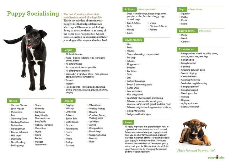 Socialisation Checklist For Your New Puppy Puppy Socialization Socializing Dogs Dog Training