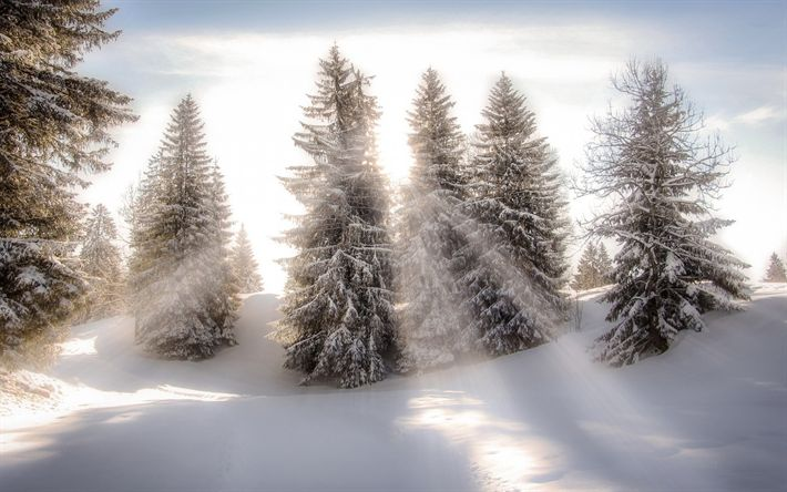 Download wallpapers sunrise, winter landscape, forest, sun rays, snow, mountains