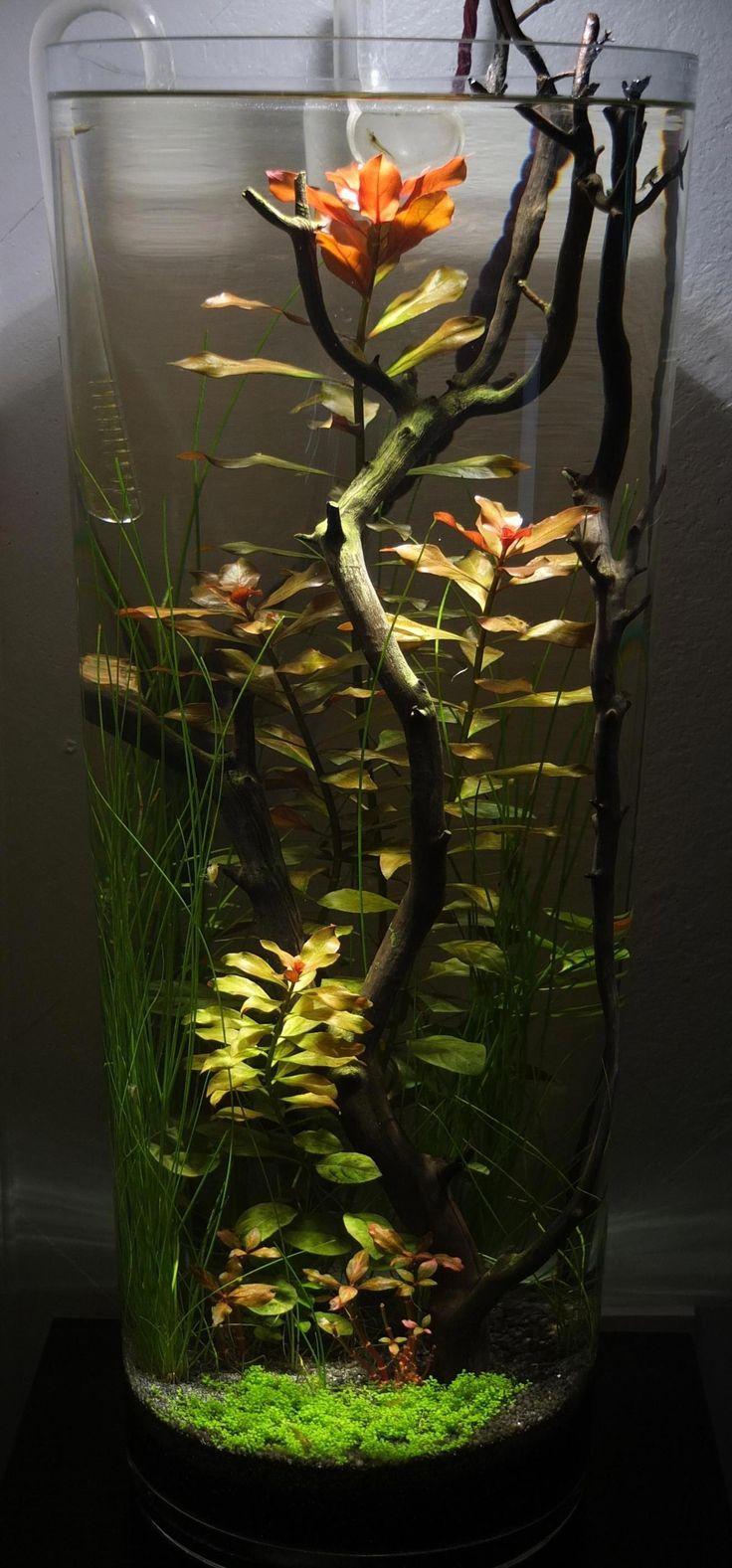 Diy fish tank decorations themes aquascaping fresh water