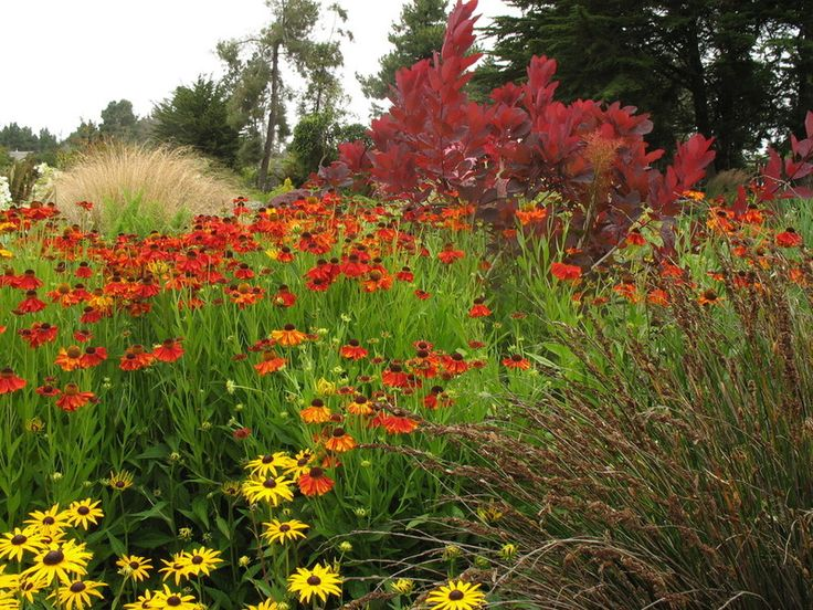Want a More Colorful, Natural Garden?  Try a Perennial Meadow--Traditional Landscape by Le jardinet