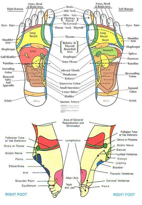 reflexology+chart | Head to Feet :: Reflexology foot chart