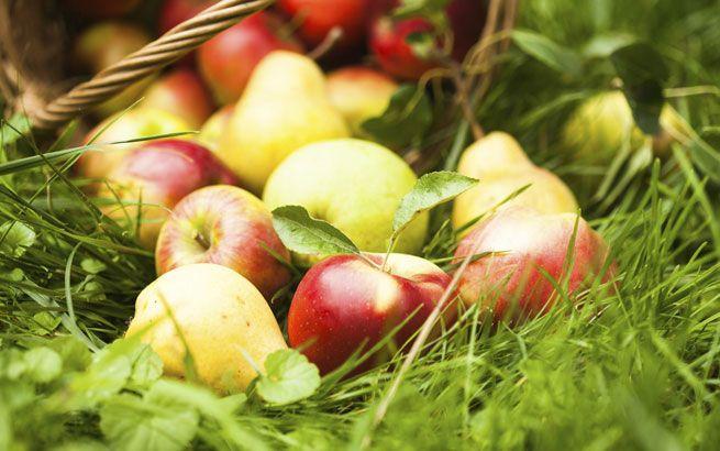 Boskoop bis Pink Lady: Apfelsorten für jeden Geschmack