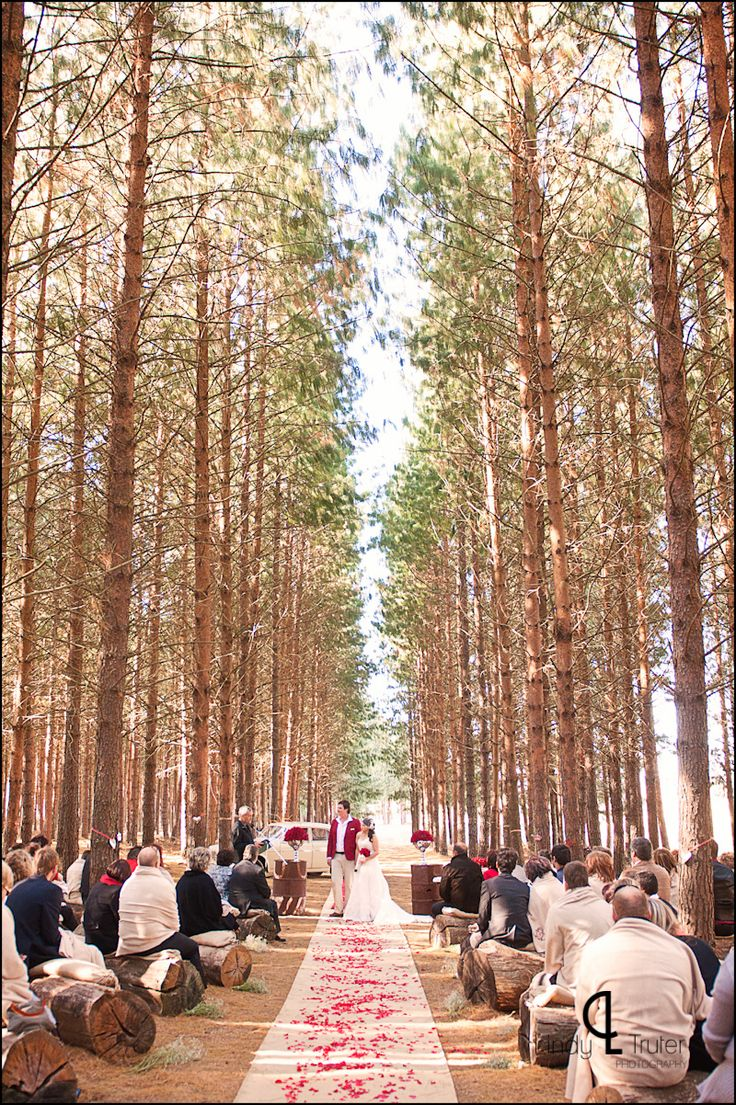 17 best images about pine forest weddings on pinterest for How to take wedding photos