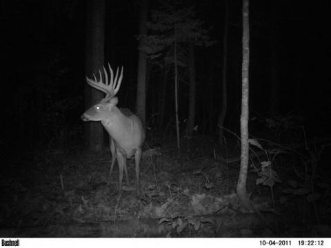Oh how i would love to see this size of deer in the woods!
