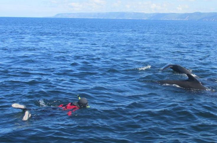 Snorkel with Whales | Cabot Trail
