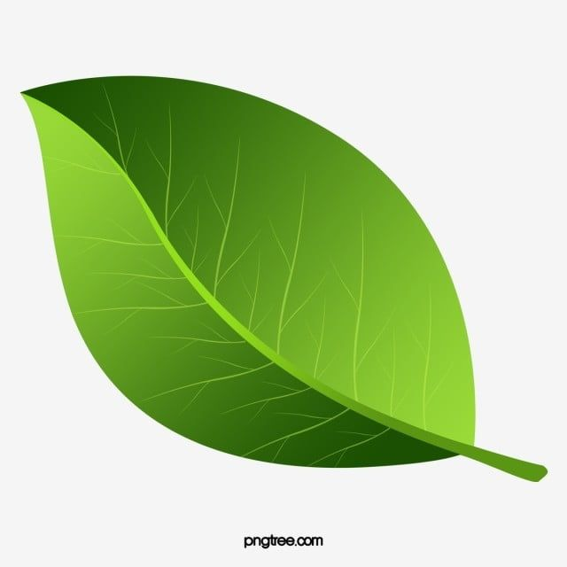 Green Leaf Texture Painted Leaf Clipart Hand Painted Leaves Green Leaves Png Transparent Clipart Image And Psd File For Free Download Leaf Texture Painted Leaves Leaf Clipart