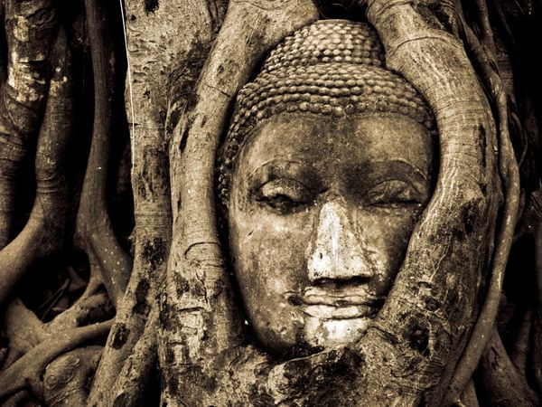 Inextricably joined with a bodhi tree—the same type of tree under which Siddhartha Gautama, the founder of Buddhism, achieved enlightenment—a Buddha head greets visitors to the ruins of Wat Mahathat in Ayutthaya. The temple is part of Ayutthaya Historical Park
