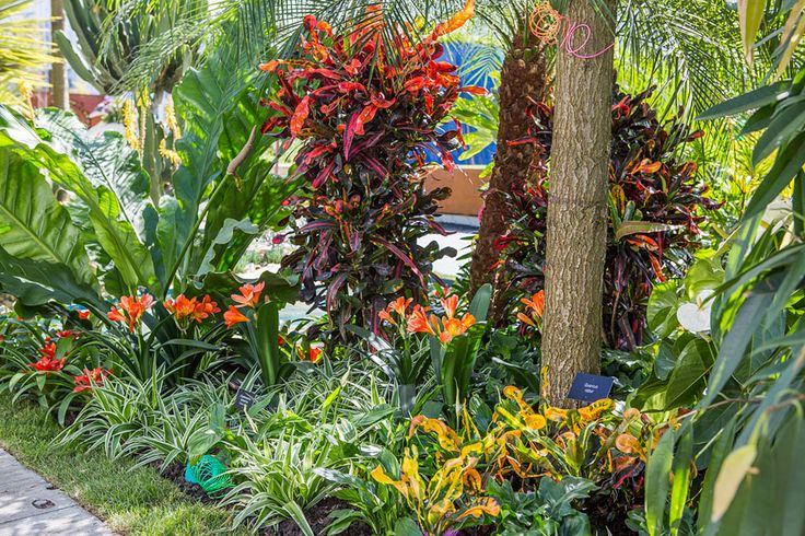 #Tropical inspiration from The Beyond Our Borders Garden at the RHS Chelsea Flower Show 2015 / RHS Gardening