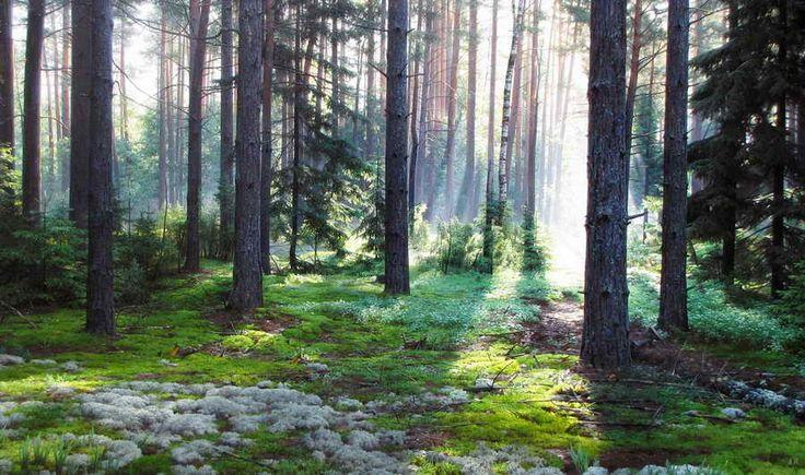 красота русского пейзажа – 17