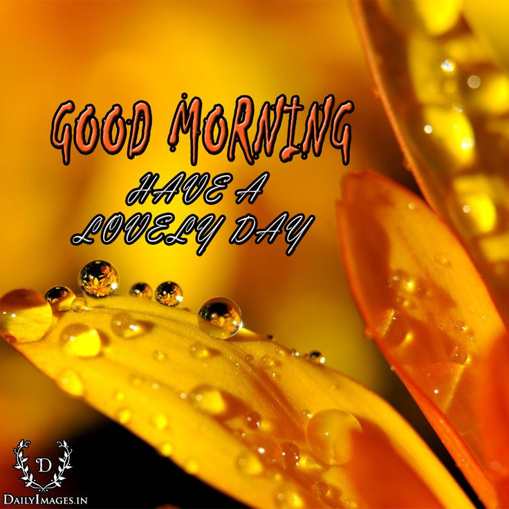 GOOD MORNING Have a lovely Day. #goodmorning #gm #quotes