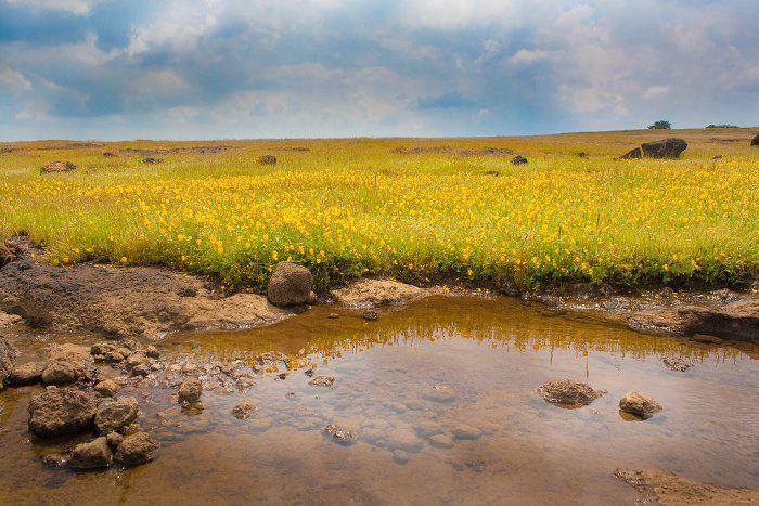 Kaas plateau near Satara, MP