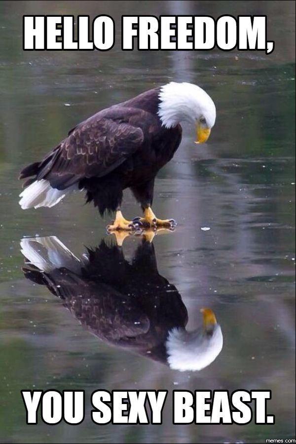 sexy-eagle-bird-furries-cum-vampires