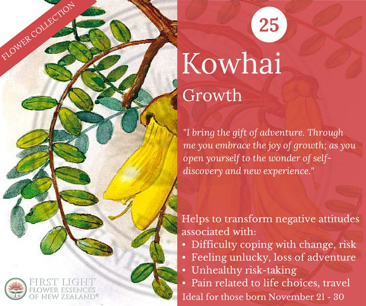 Kowhai - Growth - supports personal development. Helps to move on and break bonds with the past, encourages spirit of adventure. Use in times of change to embrace new situations and go into uncharted territory. Helps to feel empowered by the process of leaving behind the comfortable and familiar. Ideal when traveling, relocating or moving, changing school or workplace. Personal power flower for those born Nov 21-30 (Sagittarius).