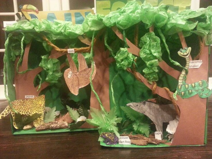 Layers Of The Rain Forrest Craft For Kids