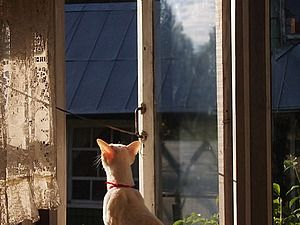 Пропал любимый кот у мастера Волшебные украшения Vincento http://www.livemaster.ru/topic/1921369 Будьте так добры,…