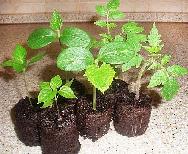 Приближается весна, а значит, пора задуматься о выращивании рассады теплолюбивых культур. Мы собрали для вас самые полезные и универсальные советы, которые помогут избежать ошибок и получить богатый у…