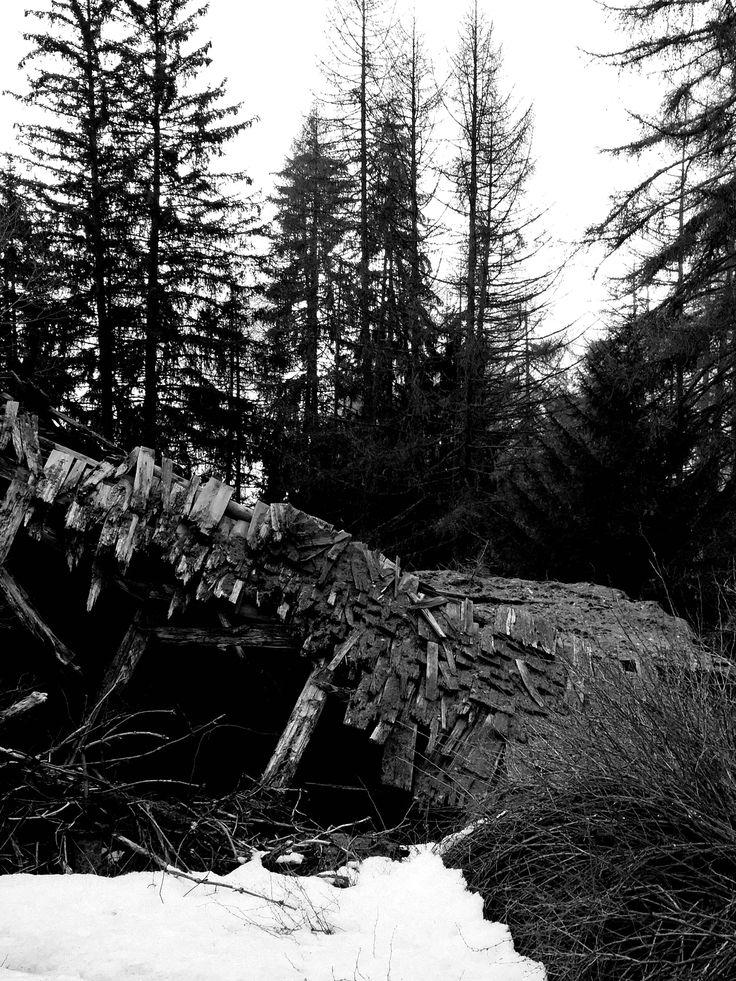 Old forest Hütte in B&W