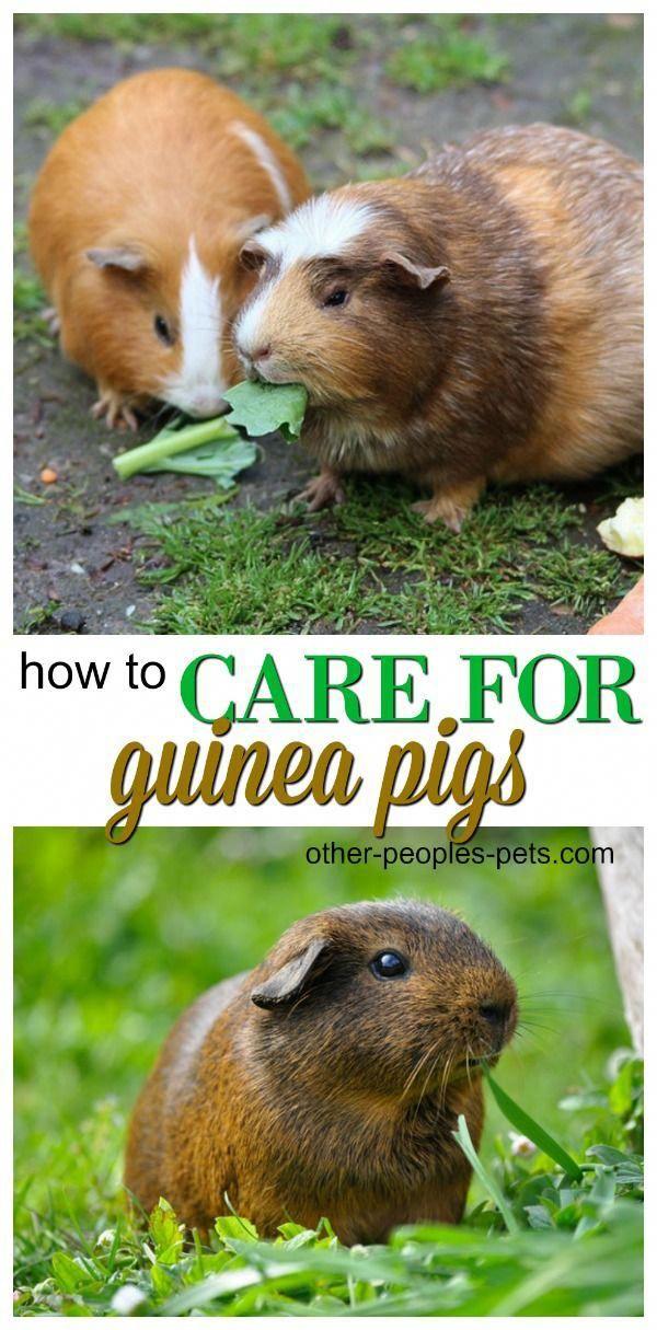 Pin On Cat Training Ideas