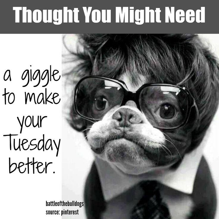 111 best Frenchie Memes images on Pinterest | Meme, Memes ...