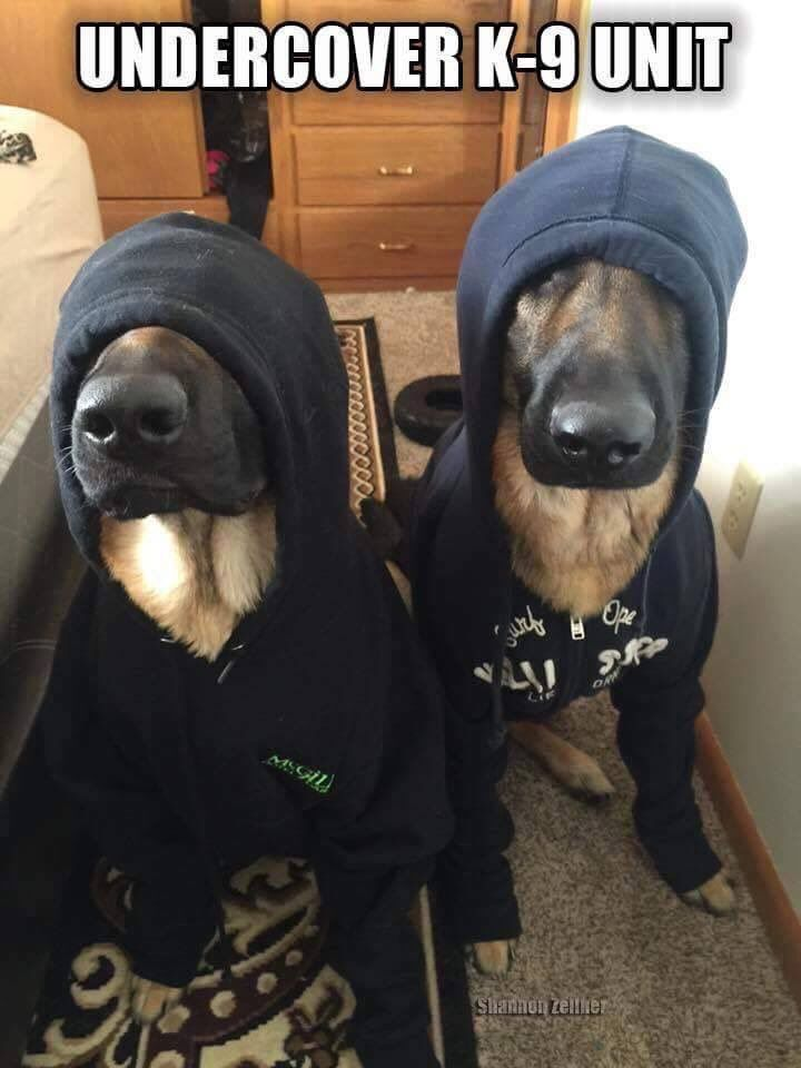 """NS PoliceDogs on Twitter: """"You ain't seen us.......right?  https://t.co/VEMEfuEWao"""""""
