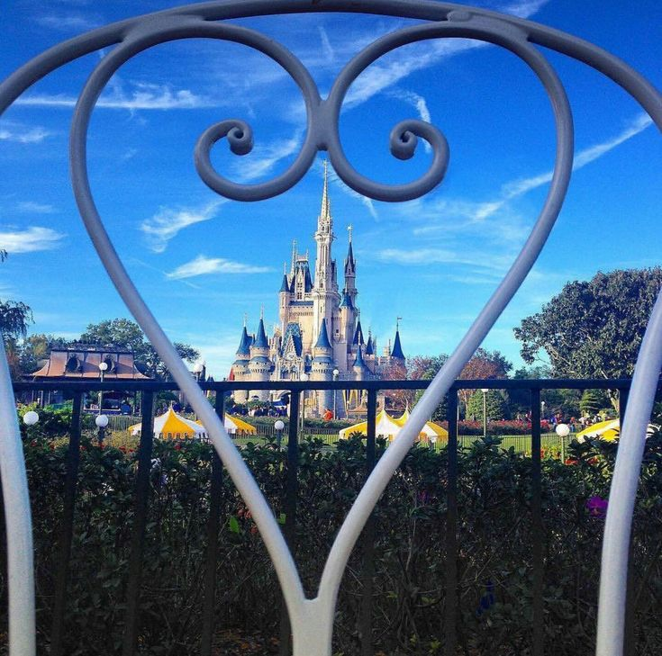 Disney world love