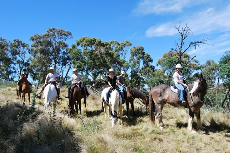 High Country Trail Rides... Group horse riding!