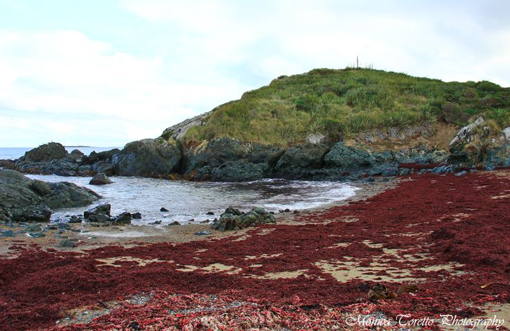 Riverton Rocks with the bright red seaweed. June 2013.