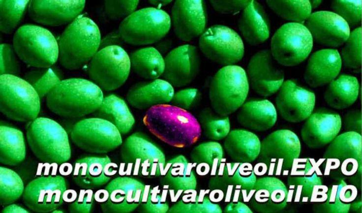 MONOCULTIVAROLIVEOIL.EXPO 2016