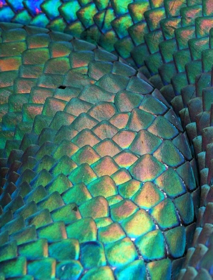 1000+ images about Fish Scales on Pinterest | Beyond the ...