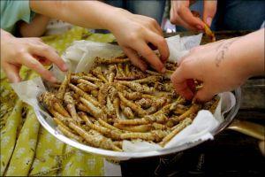 """Insecten eten is gezond en nodig -  """"De productie van insecten wordt een nieuwe sector in de landbouw en de voedings- en veevoederindustrie."""" beeld ANP"""