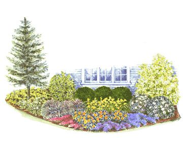 Foundation Planting Plan and guide. A colorful alternative to the standard all-green landscape, this foundation planting mixes broad-leafed evergreen shrubs and a sculptural tree with flowering perennials and groundcovers.