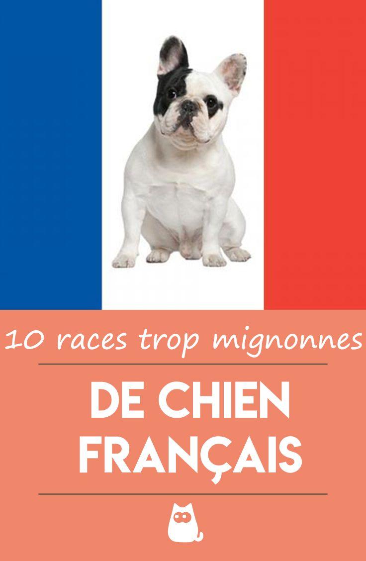 Race De Chien Français Chien Francais Races De Chiens Et