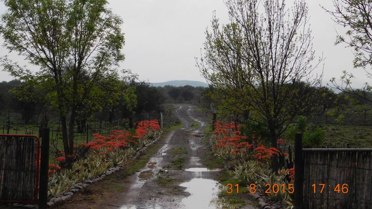 Lente REEN op Boerfontein