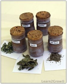 Make your own Dried Herbs, Infusions and Essential Oils!