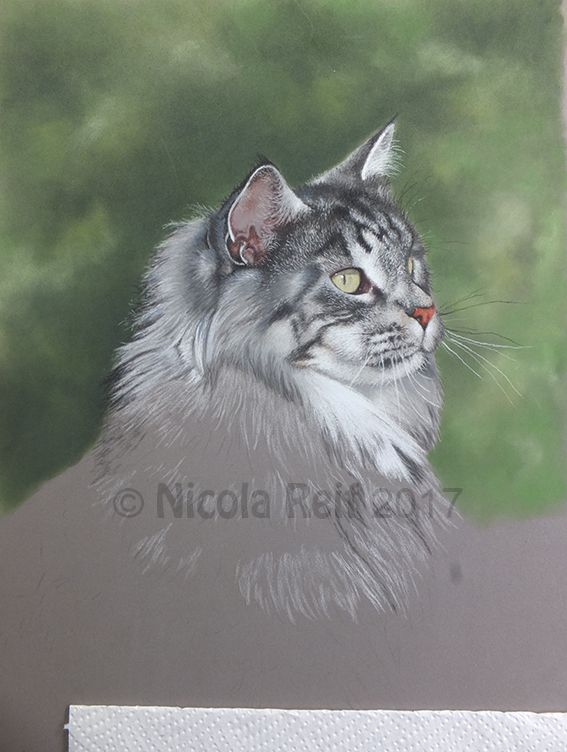 Mumble the Maine Coon cat. Pastel Pencil Pet and Wildlife art. Photo reference from own photo.