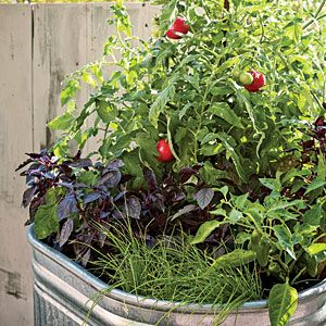 One pot vegetable garden (tomatoes, basil, garlic chives, and jalapenos)