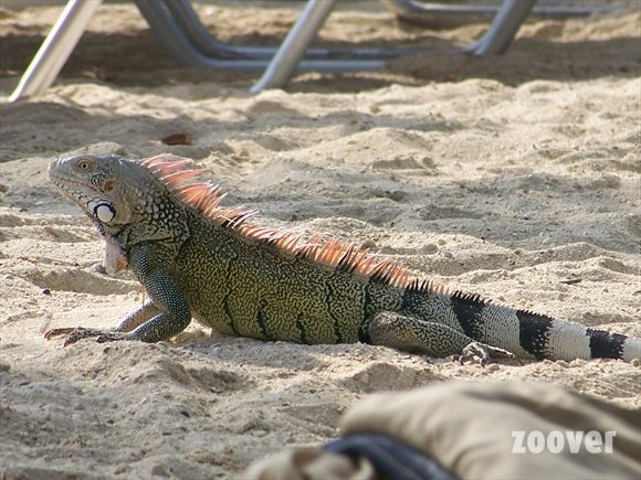 Vakantie foto's Curaçao. Bekijk foto's van Curaçao Curaçao | Zoover