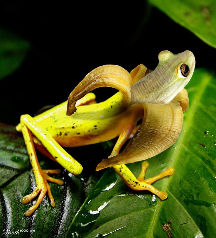 http://rookery9.aviary.com.s3.amazonaws.com/20028000/20028120_b6db_1024x2000.jpg