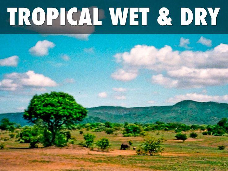 17 migliori immagini sulla savana tropicale bagnata-6627
