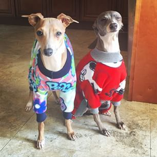 21 Photos That Prove Jenna Marbles' Dogs Are Heckin' Adorable