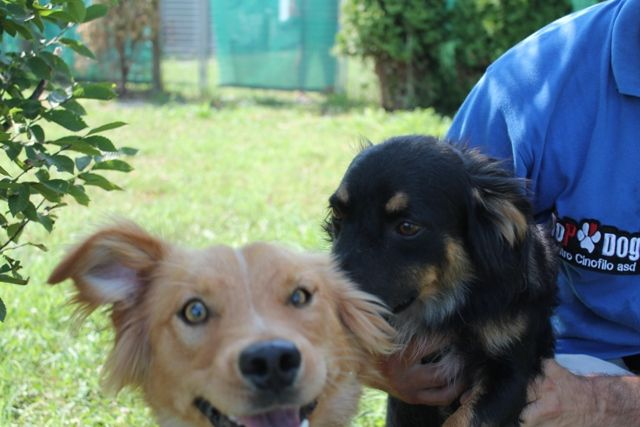 Kiro photobombs the photo session with his brother Rex.