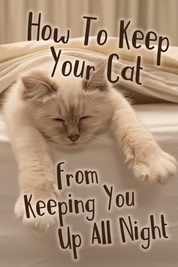 Does Your Cat Keep You Awake All Night Guess What You Can Solve The Problem By Understanding Why Your Cat Might Be Keepi Cat Meowing At Night Cats Cat Care