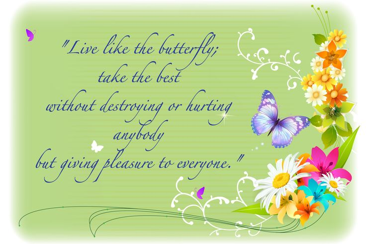 Blog - Live like the Butterfly