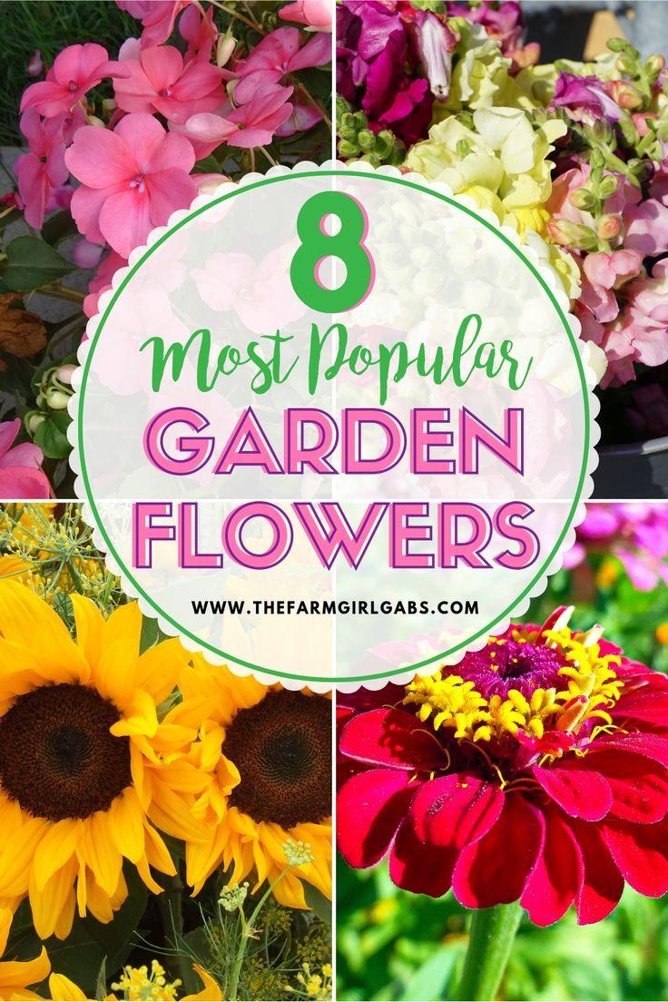 8 Popular Flowers For Your Flower Garden Popular Flowers Most Popular Flowers Gardening For Beginners