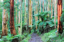 The Dandenong Ranges close to where I grew up
