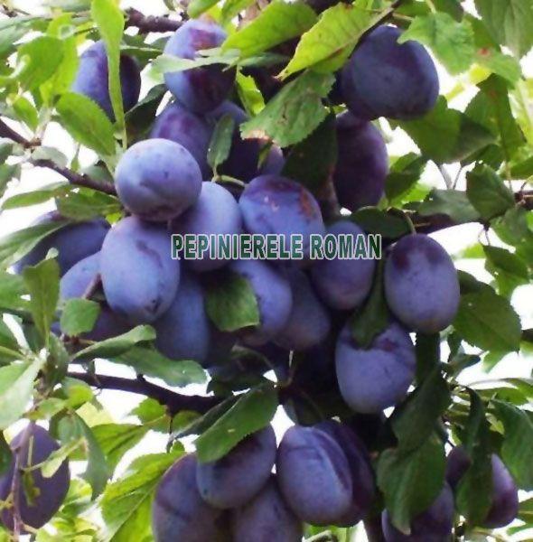 pruni