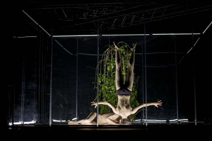 Dance festival Tanec Praha #plzen2015