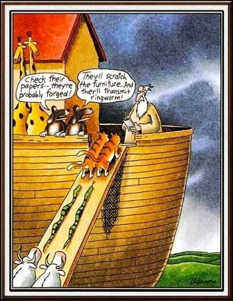 Noah Admitting Cats To The Ark What The Dogs Are Saying