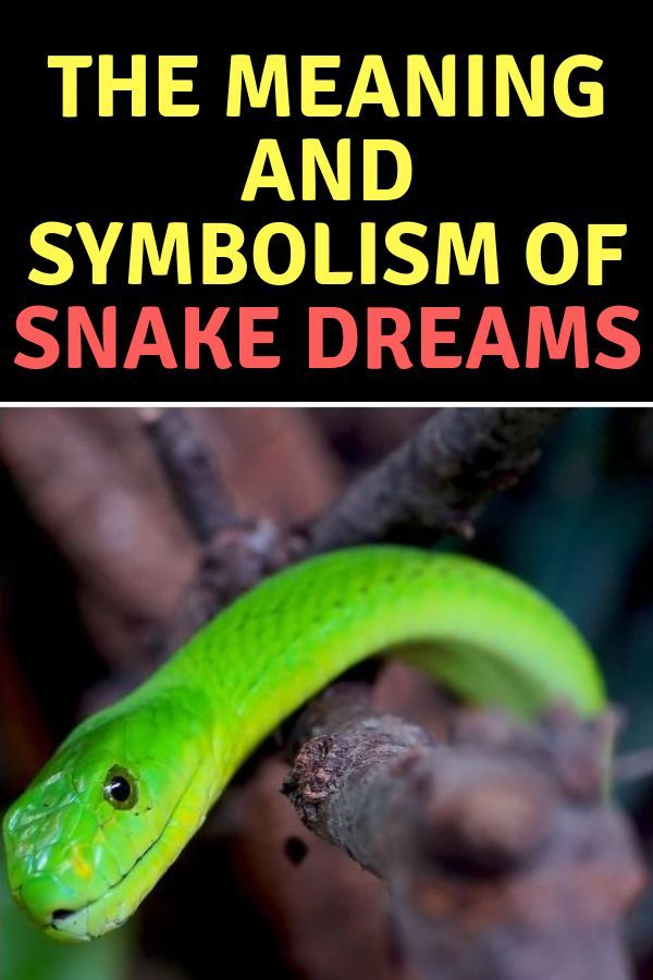 meaning of snakes in dreams